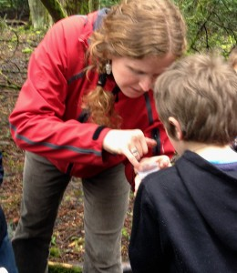 Finding insects in the park